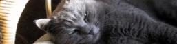 Logo gatto certosino